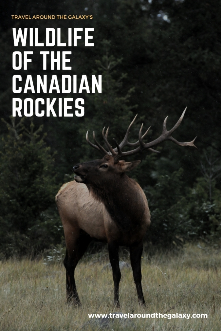 Wildlife of the Canadian Rockies (1)
